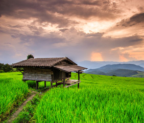 Paddy in the sunset in Chiang Mai province of Thailand