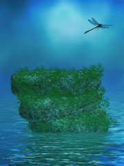 Ocean Background With Rocks and Dragonfly