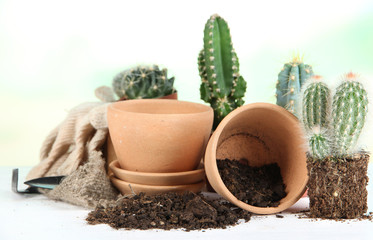 Beautiful cactuses, empty flowerpots and soil, close up