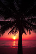 palm trees silhouette on sunset tropical beach. Tropical sunset