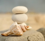 Kamienie i muszla na plaży - 60264849