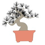 cartoon image of bonsai tree