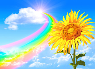 Rainbow and sunflower