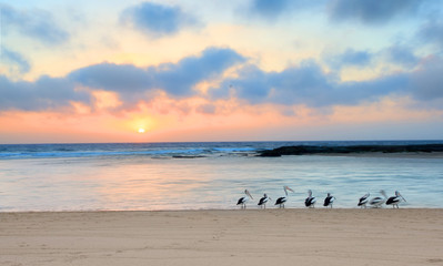 Sunrise  Australia (with pelicans at waters edge)