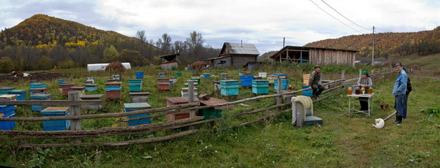 Apiary in the Urals