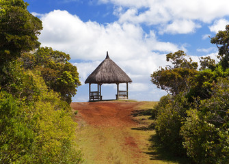 "Arbor in the wood, Park "" Black river Gorge "". Mauritius"