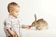 Small pretty boy feeding rabbit with carrot