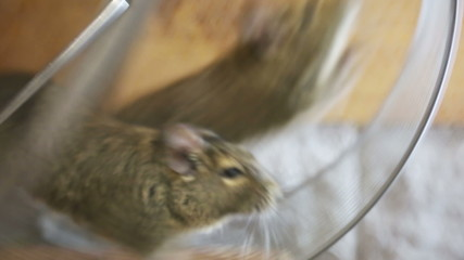 two mice running in the wheel