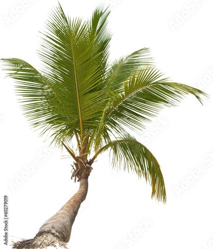 Kleine palme