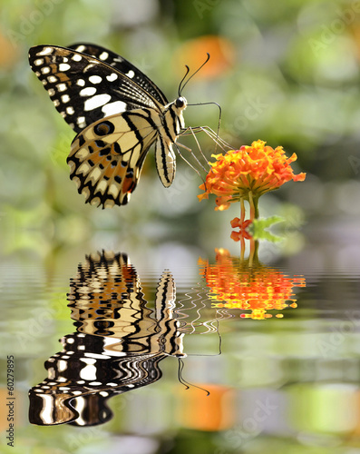 Lime butterfly above water with reflection