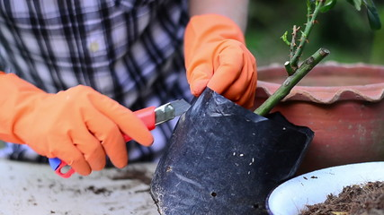 Male is cutting bag for plant propagation