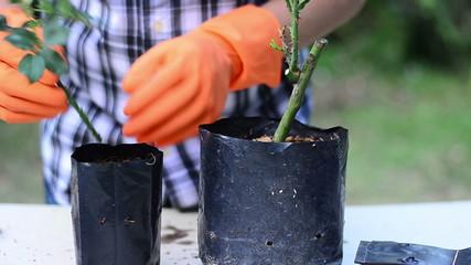 Male is plant propagation