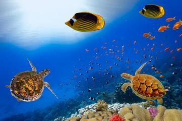 Green turtles over the sun in sipadan water while scuba diving