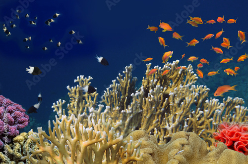 Tropical Fish on coral reef