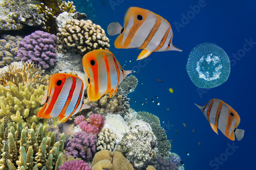 Shoal of fish and jellyfish