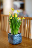 Beautiful spring narcissus flowers in pot