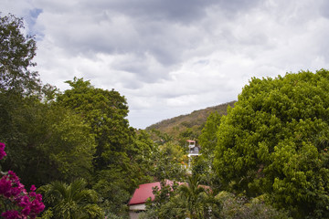 Guadeloupe gardens