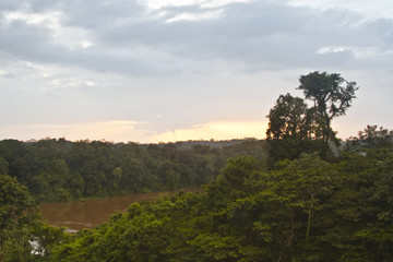 French Guiana forest