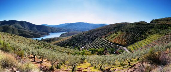 Plantation fields and lake near the village of La Pesga