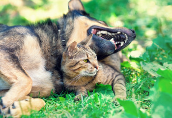 Dog and cat relaxing on the lawn
