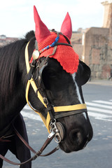 black horse with red hat