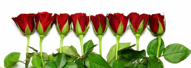 Reihe Rosen