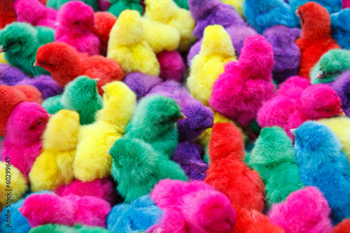 Color chicken