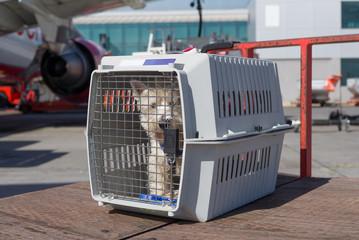 Hund im Käfig wartet auf Abflug