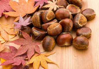 Chestnut and maple on wooden background