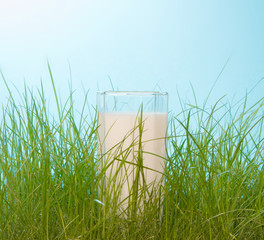 Fresh milk in the green grass