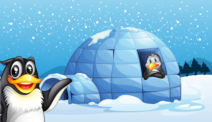 Penguins and the igloo