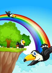 A rainbow near the cliff with flying birds