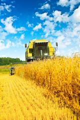 combine harvester in work
