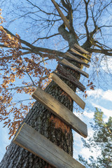 Wooden boards nailed onto a high tree forming a ladder