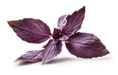 Fresh violet basil isolated on white.