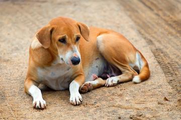 Laying stray dog