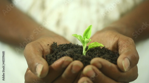 Man Holding Plant in his Hands