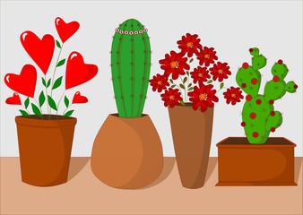 piante per s. valentino