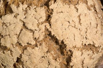 Pane di grano