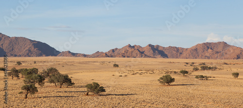 Desert landscape with grasses, red sand dunes and an African Aca