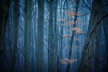 Dark forest with single branch of bright leaves