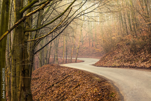 Empty road through forest in autumn