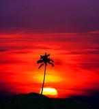 la palmera y el sol
