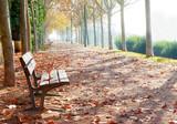 Fototapety Parque en Otoño.Detalle de banco y hojas en tonos naranja