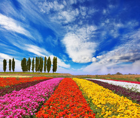 Commercial cultivation of flowers for sale abroad.