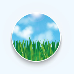natural background.eco background.green grass with dew drops on