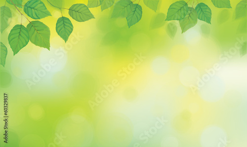 Vector green leaves  branches on sunshine background.