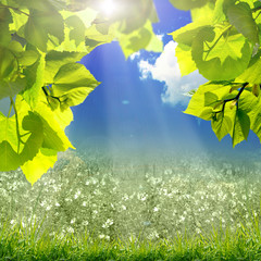 green leaves and sun on blue sky