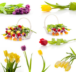 Colorful fresh spring tulips flowers.  set of tulips isolated on