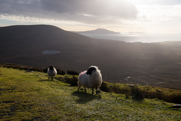 Mountain view with sheep.
